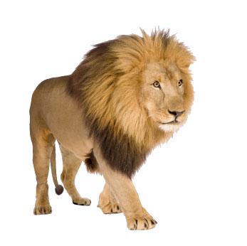 leone01